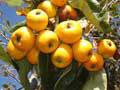 Frutas de México (Parejas)